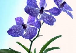 Çiçek Sepetleri İle Popüler Aşkın Renkleri